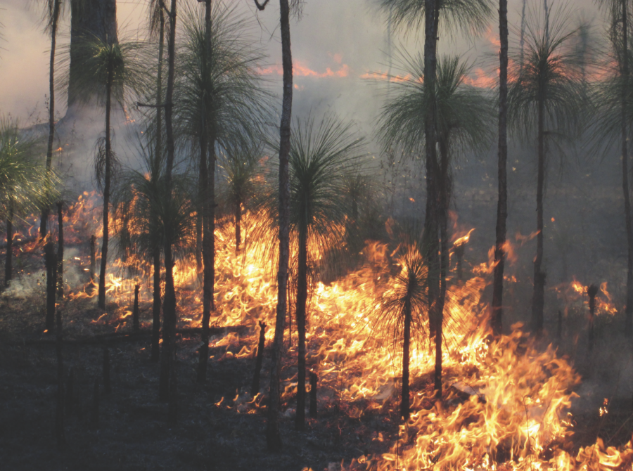 A prescribed fire burns through Oregon. Prescribed burning is the practice of designing and triggering man-made fires, which can be used throughout the year to manage wildfire fuel supply.