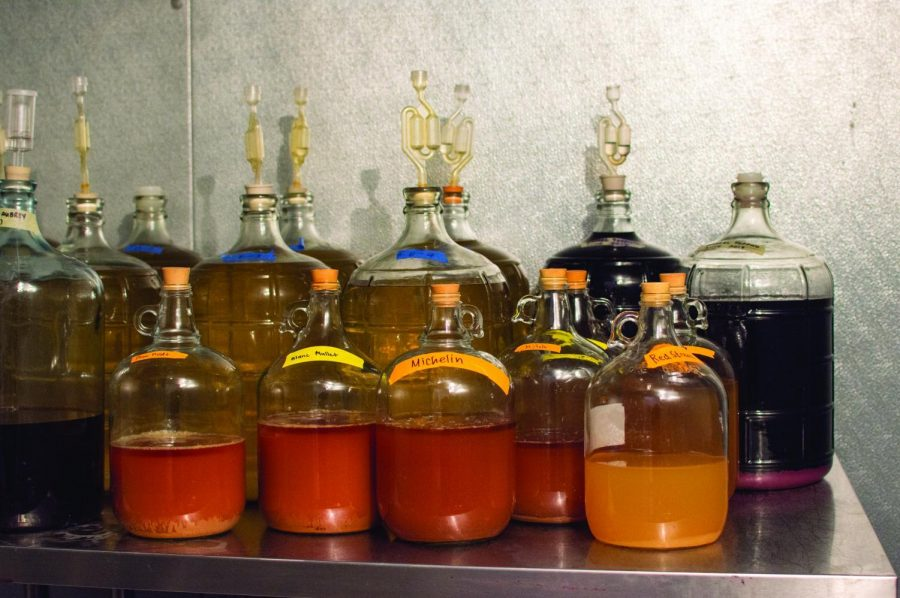 Glass+carboys+hold%C2%A0+samples+in+a+temperature+controlled+inside+the+pilot+plant+winery+in+Withycombe+hall.