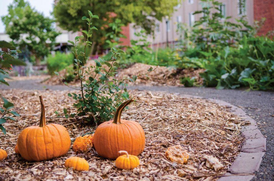 541+Garden+Pumpkins