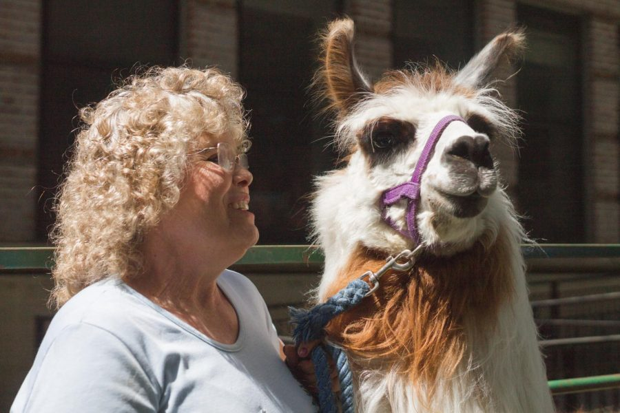 Julie+Koenig+poses+with+Outstanding%2C+a+two-year+old+llama%2C+one+of+the+many+llamas+she+brought+to+Pet+Day+2019.+According+to+Koenig%2C+llamas+don%E2%80%99t+have+different+breeds%2C+but+they+are+classified+by+their+wool+classes.+Outstanding%E2%80%99s+wool+class+is+medium+heavy.