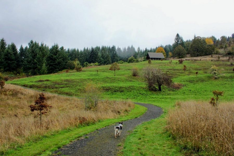 FORT+HOSKINS+HISTORIC+PARK%3A+22953+HOSKINS+RD%2C+PHILOMATH1%29+Operated+by+Benton+County+Natural+Areas+%26amp%3B+Parks%2C+this+recreational+area+of+130+acres+offers+restrooms%2C+picnicking%2C+educational+interpretive+displays+and+self-guided+trails.%C2%A0
