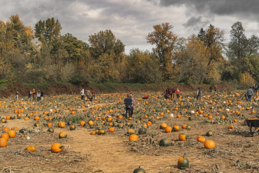 Corvallis+Residents+at+The+Melon+Shack+located+at+NE+Garden+Avenue.+The+popular+attraction+spot+features+a+pumpkin+patch%2C+haunted+corn+maze%2C+and+fall+treats.