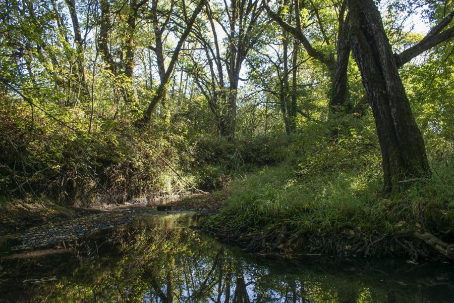 Oak Creek, a 3.5 long tributary of Marys River in Corvallis, Ore., sits still on a brisk morning on Oct. 3. Oak Creek has a significant impact on the local environment but human pollution has warmed the water temperature and affected the various organisms that live in it.